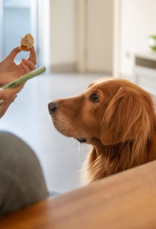 köpek-kusması-acil-ümraniye-veteriner