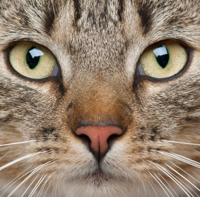 kedi göz hastalıkları