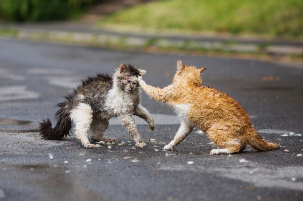 Kedim kavgada yaralandı, ne yapmalıyım?