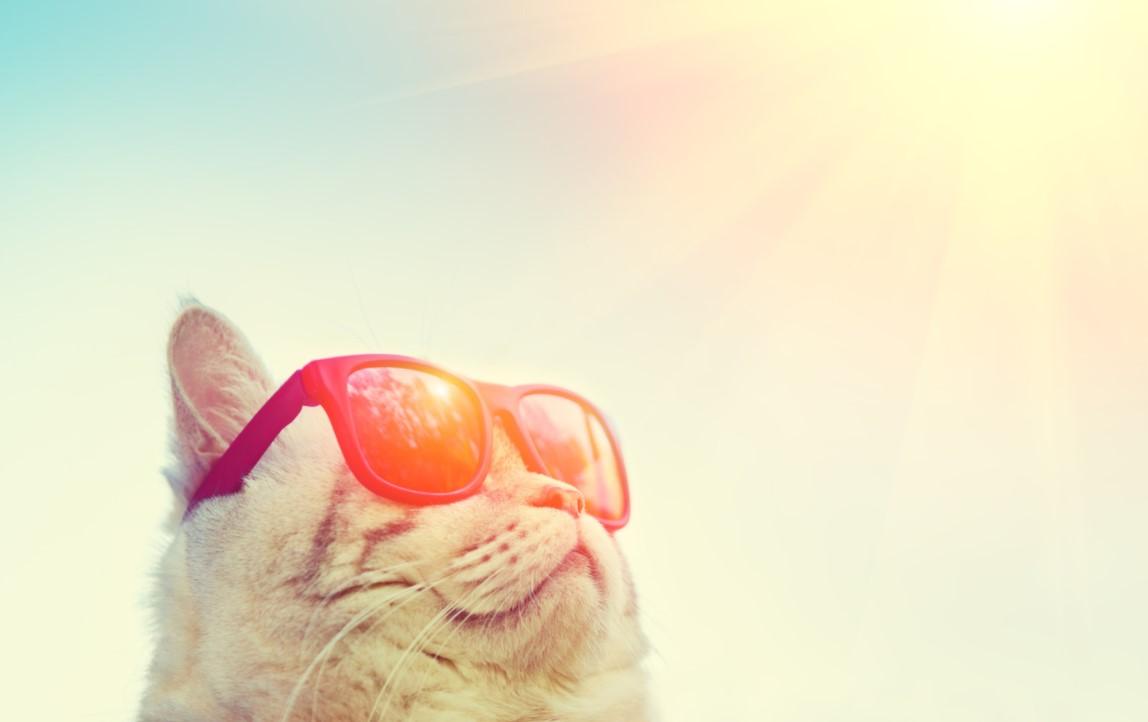 Kedi Sıcak Çarpması