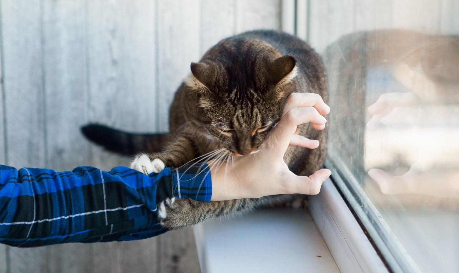 kedi ısırnıca ne yapılır