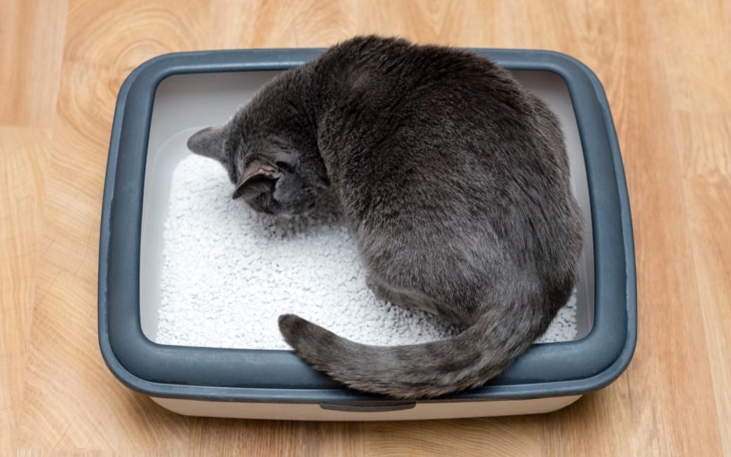 Kedim kakasını yiyor, ne yapmalıyım?