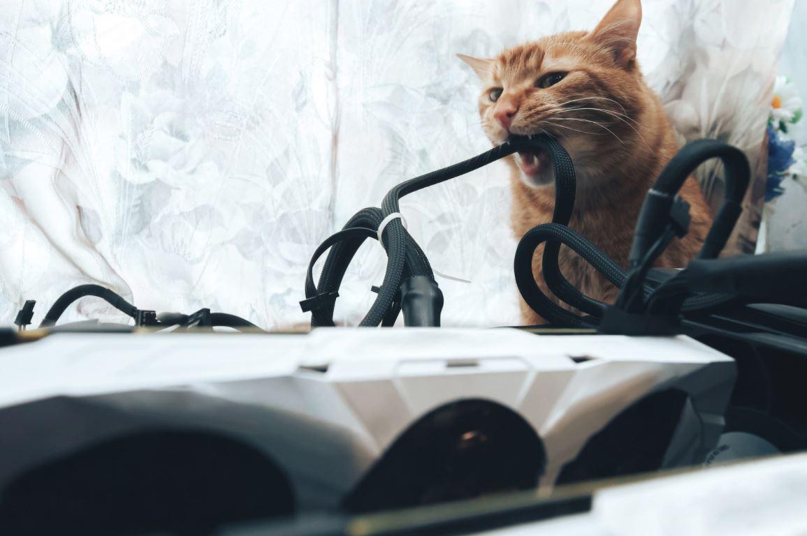 Kedime elektrik çarptı ne yapmalıyım